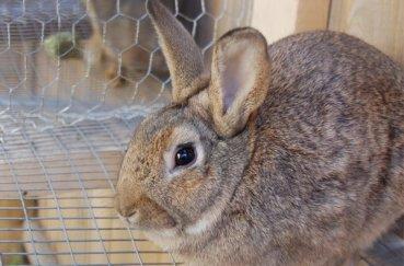Кролик сидит в клетке