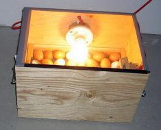 Инкубация яиц в самодельном агрегате