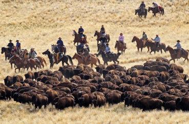 Использование одомашненных коней в сельской работе