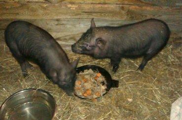 Животные едят отходы с нашего стола