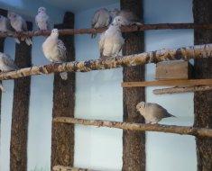 Самый простой насест для голубей