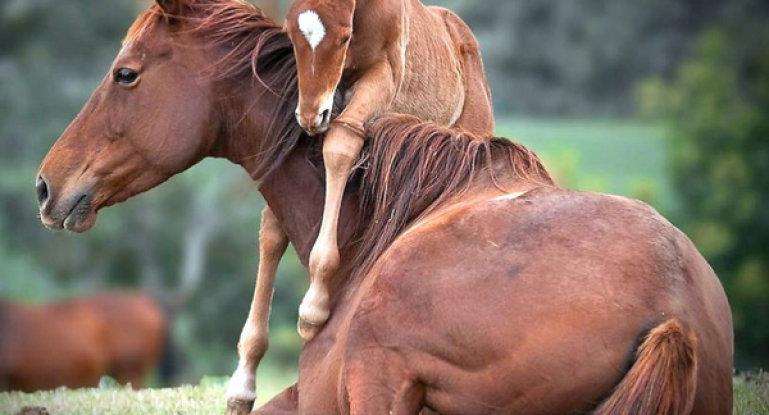 лошадь кличка или имя