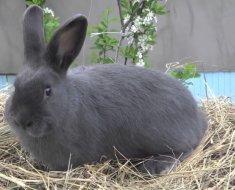 Венский кролик на соломенной подушке