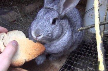 Кролика кормят в клетке