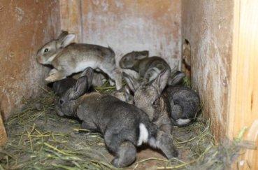 Несколько кроликов в клетке