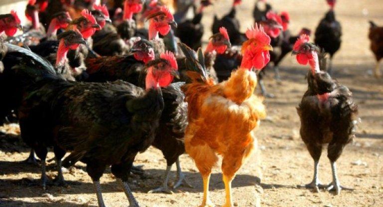 Бизнес план куры утки открытие филиала фирмы в польше