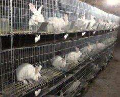 Кроли в двухъярусных клетках из сетки