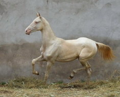Молодая лошадь в загоне