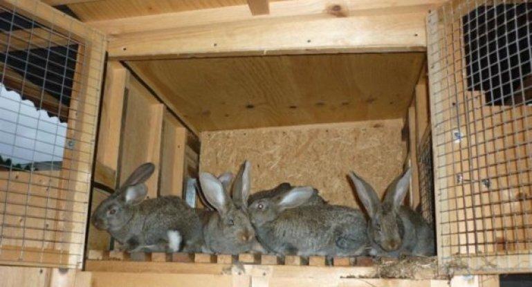 Картинки по запросу Как построить клетку для кроликов
