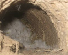 Нора кролика в яме