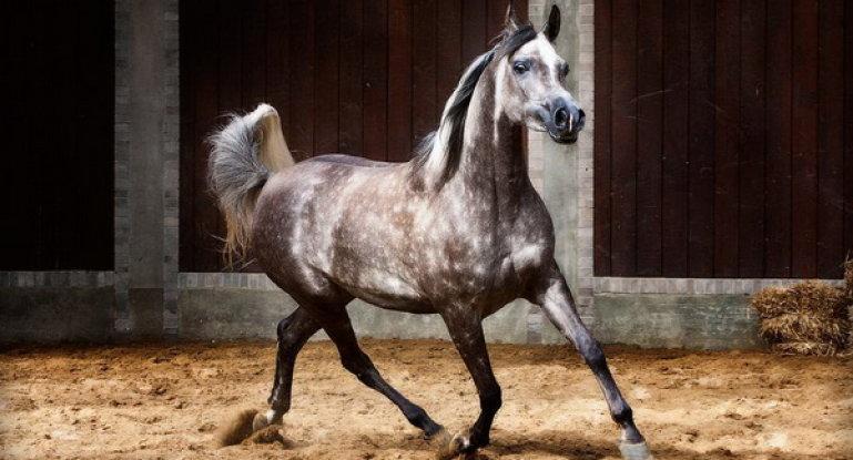 Легендарные лошади   415x769