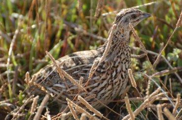 Птичка замаскировалась в траве