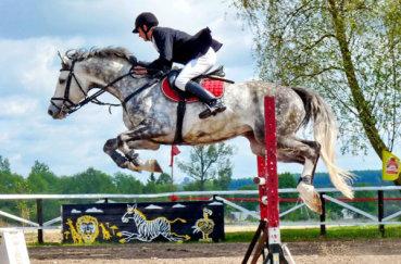 Орловская лошадь в конкуре