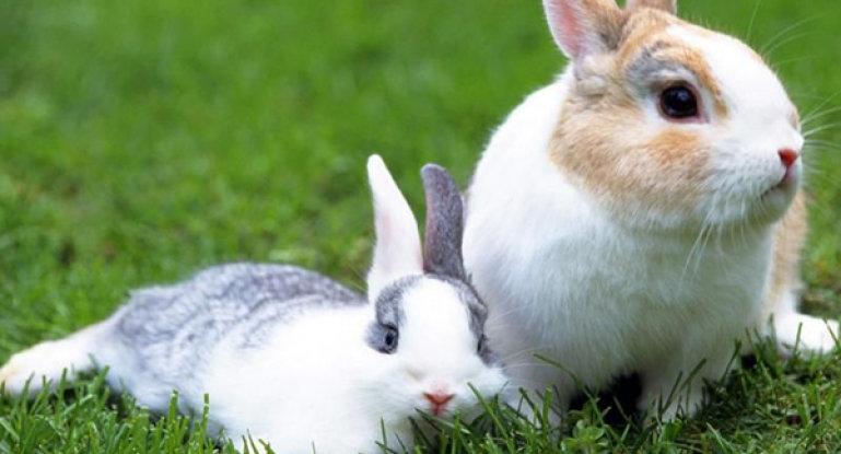 почему крольчиха убивает своих крольчат