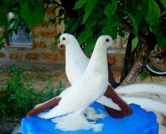 Два белых голубя-узбека крупным планом