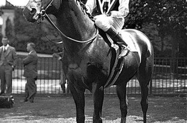 Сухарь - один из самых известных представителей скаковых лошадей