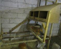 Самодельное гнездо для несушек