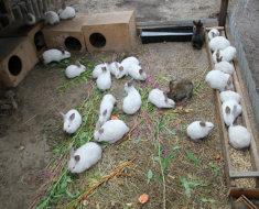 Содержание кролей в вольерах