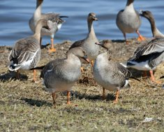 Фото 6. Птицы у воды