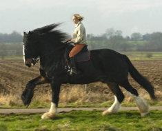 Гигантский конь Крекер бежит