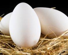 Три гусиных яйца на соломе