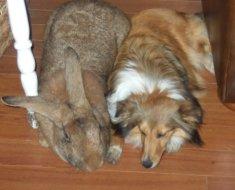 Огромный Дарий с собакой