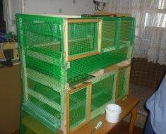 Цыплятник из зеленой сетки