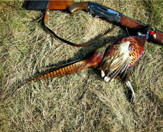 Охота на фазанов