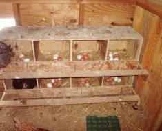 Деревянный стеллаж из гнезд для голубей
