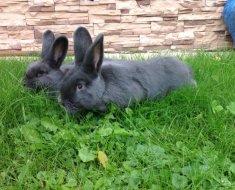 Кролики отдыхают на травке
