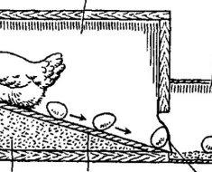 Схема яйцесборника в действии