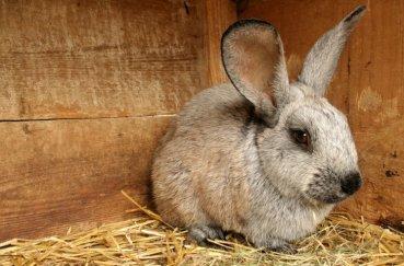 Кролик с мокрой мордочкой