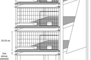 Четырехэтажный «дом» для кур и цыплят