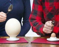 Куриное и страусиное яйцо на подставке