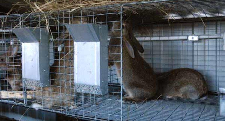 сетка для пола клетки кроликов