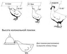 Рекомендуемая высота поильников для кур