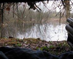 Вид из шалаша-скрадка на водоем