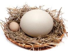 Гусиное и перепелиное яйцо в корзинке