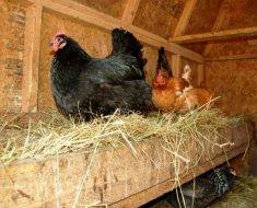 Гнездо для кур из ящика