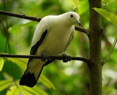Дикая птица в лесах