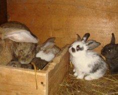 Подросшие кролики в клетке
