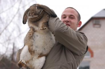 Мужчина и кролик