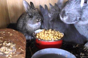 Прикорм животных