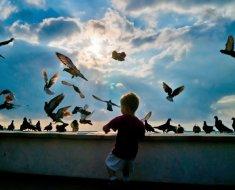 Мальчик кормит голубей