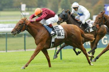 Лошади и жокеи на поле