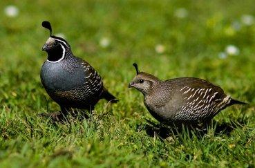Один из видов маленькой птицы
