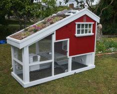 Дом для кур с клумбой на крыше