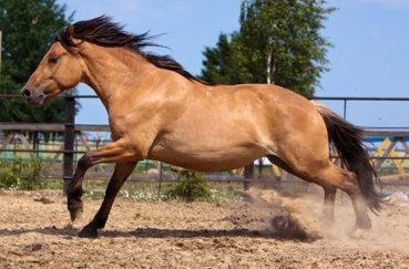 Саврасый конь в бочке