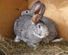 Крольчата-подростки