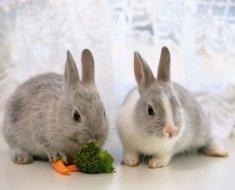 Серые кролики едят овощи